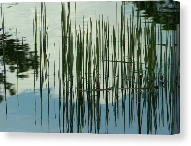 Water Canvas Print featuring the photograph On The Way To Tractor Supply 3 1 by Gary Bartoloni