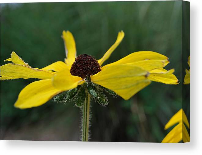 Yellow Canvas Print featuring the photograph Open To The Sky by Amanda Vouglas