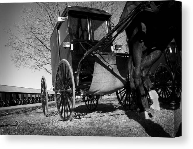 Amish Canvas Print featuring the photograph Patience by Kevin Brett