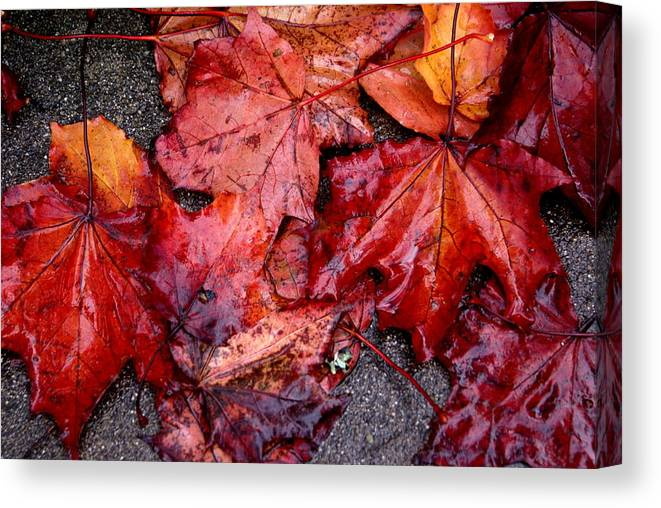 Fall Season Canvas Print featuring the photograph Soggy Leaves by Sonja Anderson