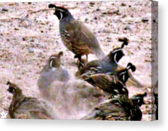 Partridge Spa Treatment Canvas Print featuring the photograph Spa Treatment by Debra   Vatalaro