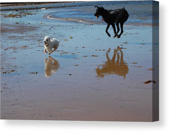 Pets Canvas Print featuring the photograph Spring Playtime by Sarah King