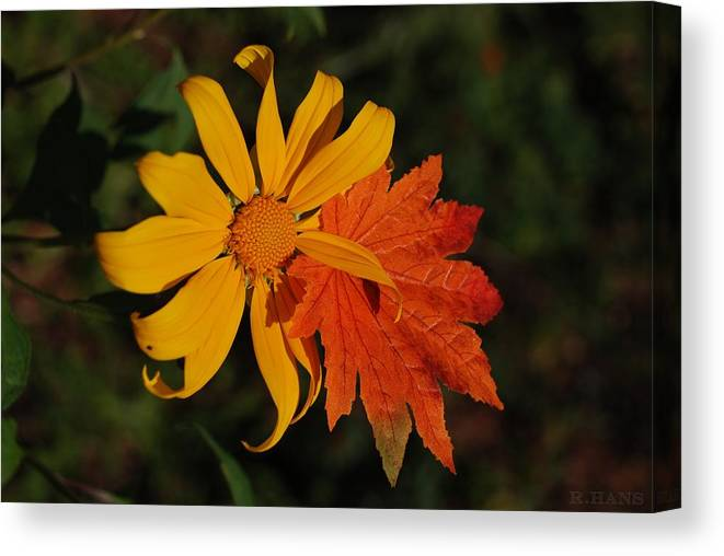 Pop Art Canvas Print featuring the photograph Sun Flower And Leaf by Rob Hans
