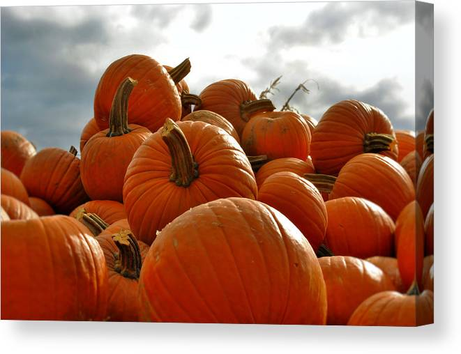 Pumpkins Canvas Print featuring the photograph Take Your Pick by Laura DAddona