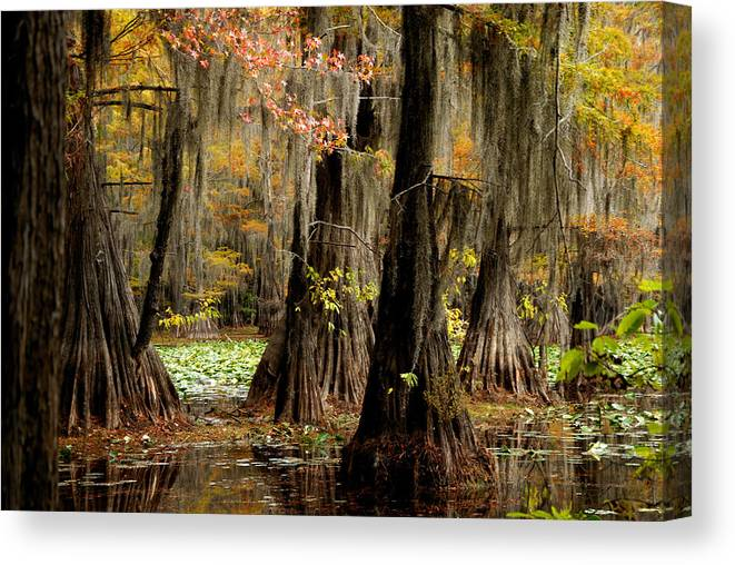 Lake Canvas Print featuring the photograph Tranquility In The Cyoress Forest by Iris Greenwell