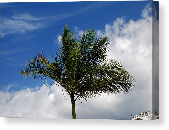 Palm Tree Canvas Print featuring the photograph Tropical Breeze by Gary Wonning