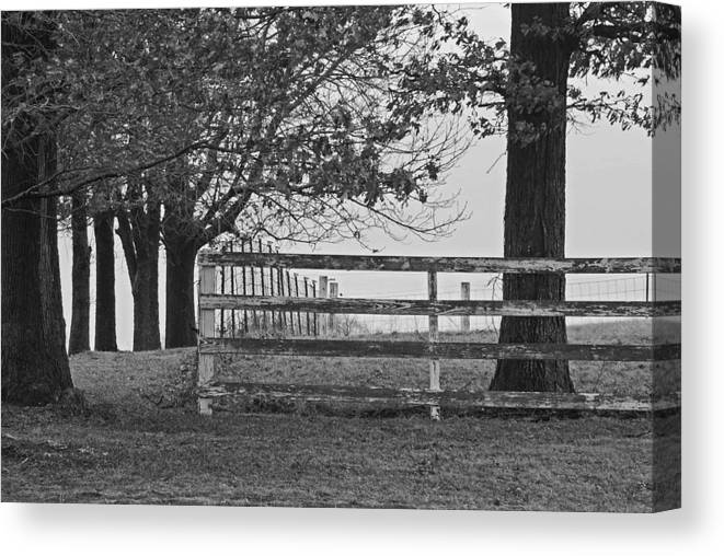 Fence Canvas Print featuring the photograph Were You A Bad Oak by Michelle Hastings