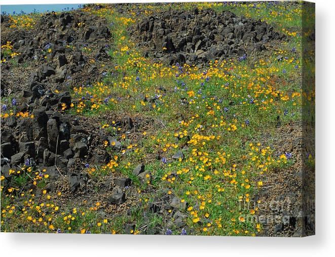 Flower Canvas Print featuring the photograph Wild Flowers by Richard Verkuyl