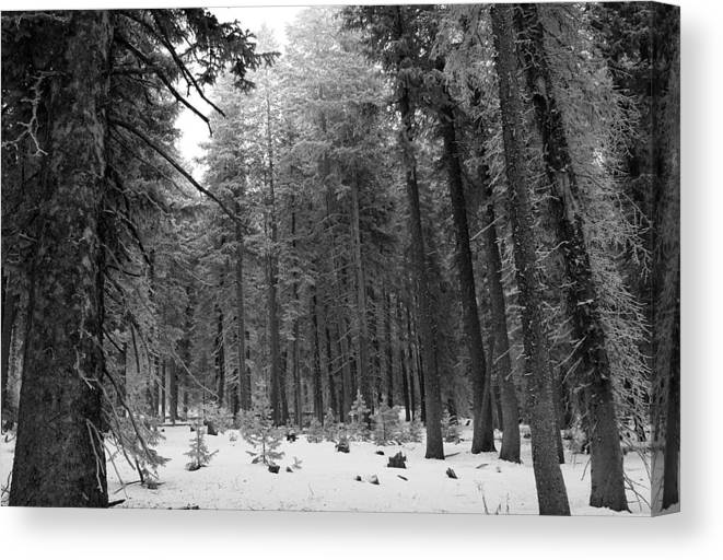 Mountains Canvas Print featuring the photograph Winter In The Mountains by Goldie Pierce