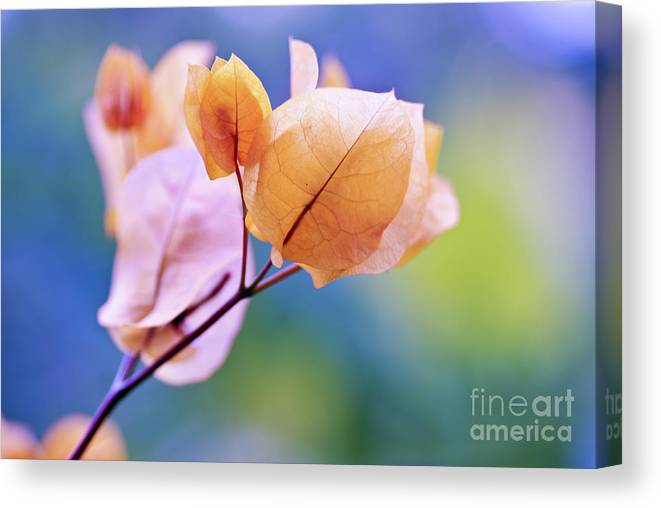 Bougainvillea Canvas Print featuring the photograph Yellow Bougainvillea by NAJE Foto - Nelly Rodriguez