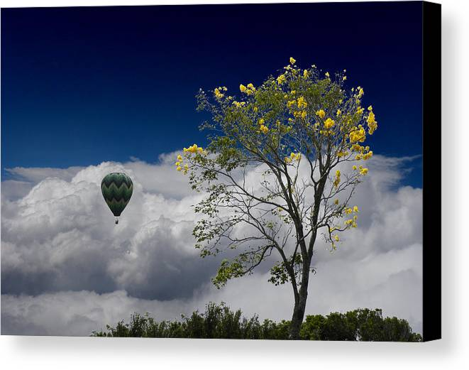 Trees Canvas Print featuring the photograph 2492 by Peter Holme III