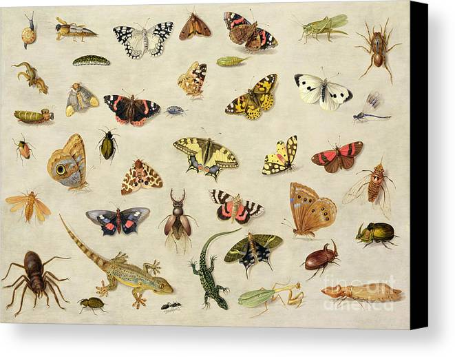 Collection Canvas Print featuring the painting A Study Of Insects by Jan Van Kessel
