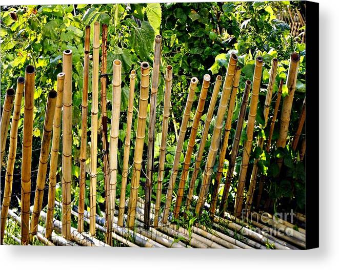 Bamboo Canvas Print featuring the photograph Bamboo Fencing by Lilliana Mendez