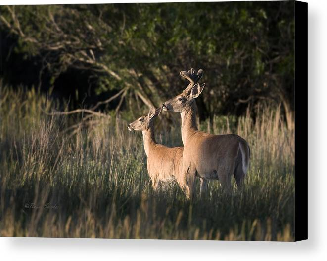 Beautiful Canvas Print featuring the photograph Deer By Belfry Montana by Roger Snyder
