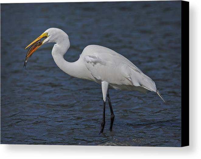 Animals Canvas Print featuring the photograph Eye To Eye by Susan Candelario