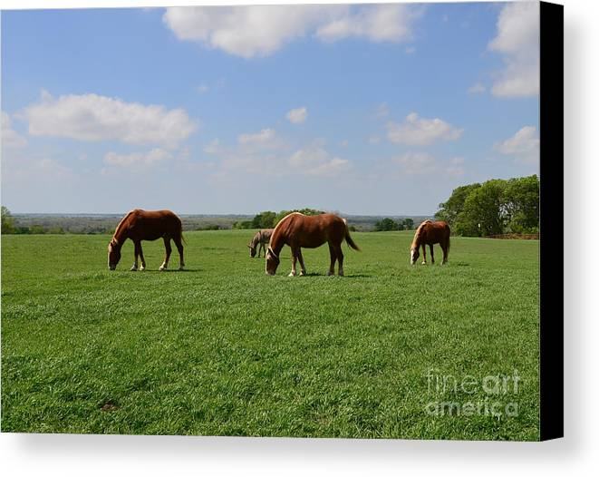 Horse Canvas Print featuring the photograph Grazing In The Field by Hilton Barlow