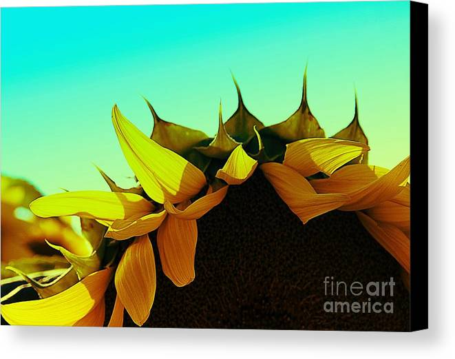 Sunflowers Canvas Print featuring the photograph Petals by Stephanie Buckley
