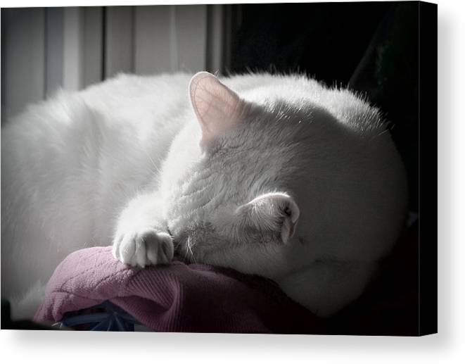 Cat Canvas Print featuring the photograph Sleep by Mary Zeman