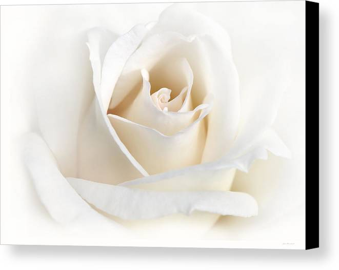 Rose Canvas Print featuring the photograph Soft Ivory Rose Flower by Jennie Marie Schell