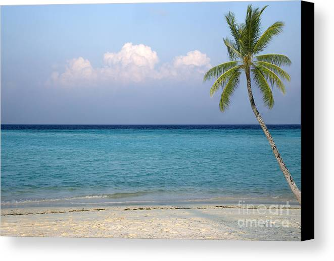Maldives Canvas Print featuring the photograph Tropical Paradise by Rosemary Calvert