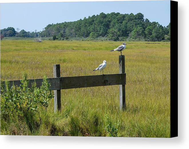 Bird Canvas Print featuring the photograph Two Birds On A Fence by Doug Kline