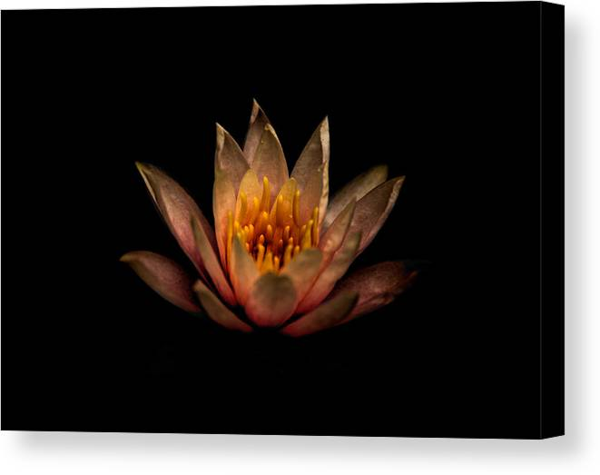 Water Canvas Print featuring the photograph Waterlily 2 by Gail Stephenson