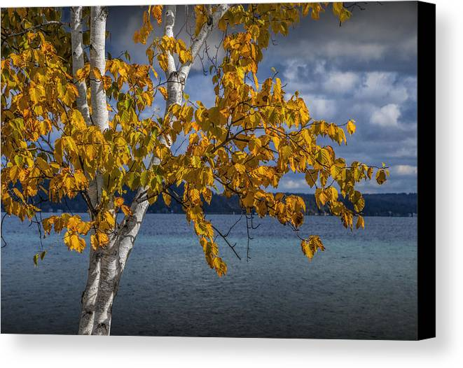 Art Canvas Print featuring the photograph White Birch Tree In Autumn Along The Shore Of Crystal Lake by Randall Nyhof