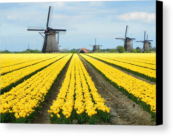 Windmills Tulips Netherlands Views Flowers Canvas Print featuring the photograph Windmills And Tulips by David Gardner