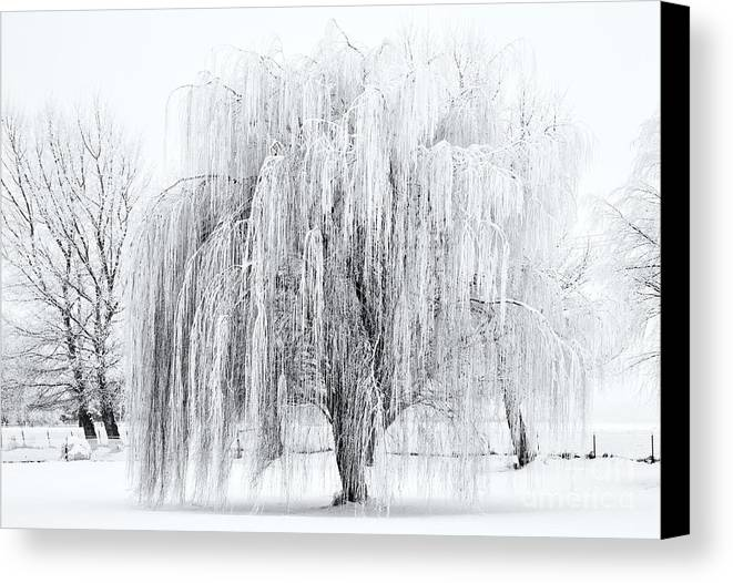 Willow Canvas Print featuring the photograph Winter Willow by Mike Dawson