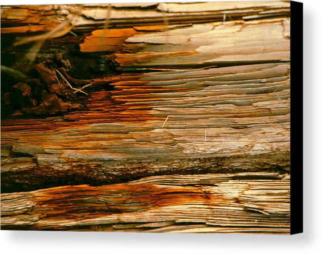 Wood Canvas Print featuring the photograph Wooden Abstract by Michael Durst