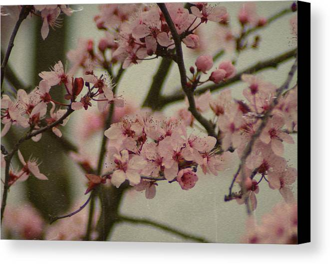 Flowers Canvas Print featuring the photograph Sweet Spring by Terrie Taylor