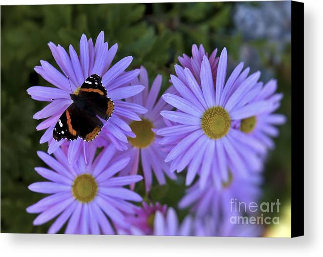 Butterfly Canvas Print featuring the photograph Wings Of Hope by Brenda Giasson