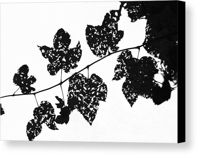 Leaf Canvas Print featuring the photograph 080506-22 by Mike Davis