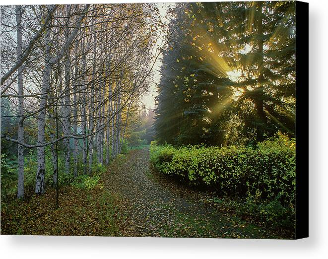 Landscape Canvas Print featuring the photograph Evening Light by Vladimir Kholostykh