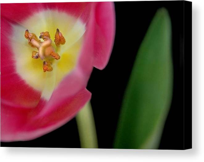 Flower Macro Detail Canvas Print featuring the photograph A Little Detail by Dan Holm