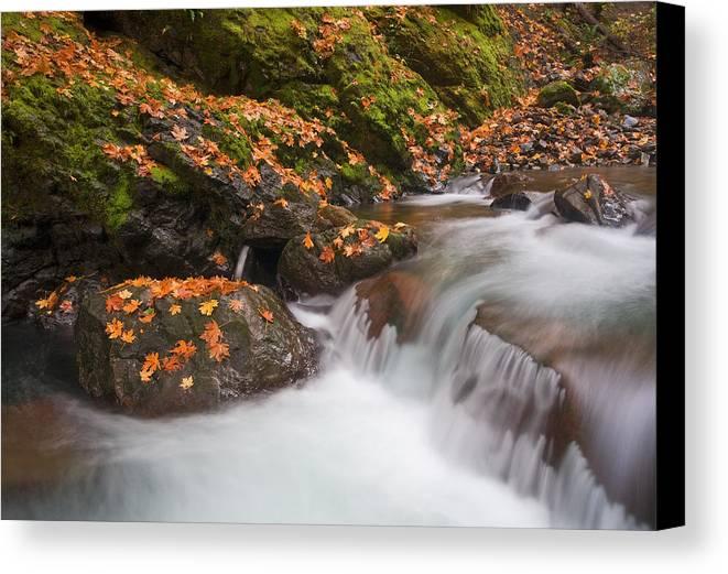 Autumn Canvas Print featuring the photograph Autumn Litter by Mike Dawson