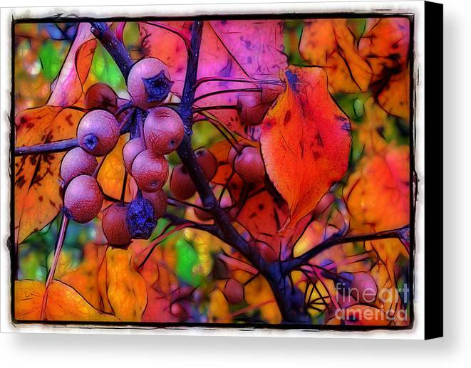 Bradford Canvas Print featuring the photograph Bradford Pear In Autumn by Judi Bagwell