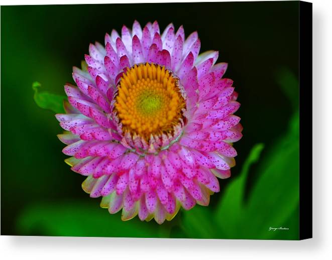 Floral Canvas Print featuring the photograph Colors Of Nature - Grand Opening 001 by George Bostian