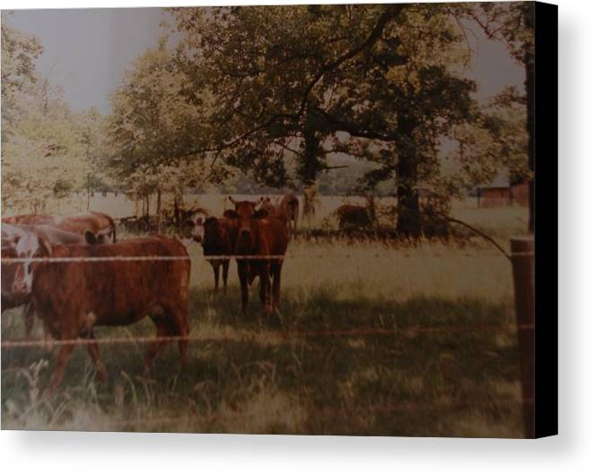 Cows Canvas Print featuring the photograph Cows by Rob Hans