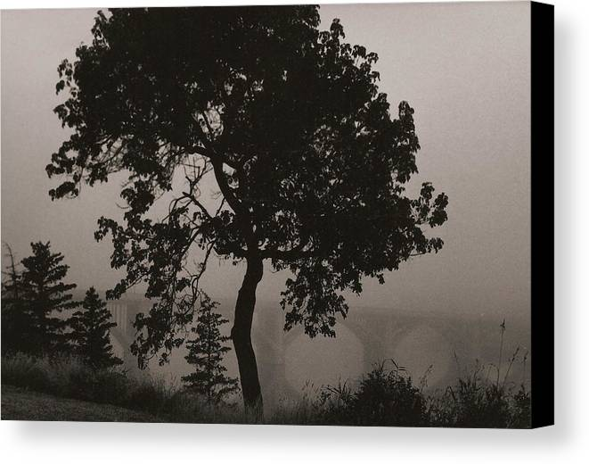Elm Canvas Print featuring the photograph Dark Elm By River by Arnold Isbister