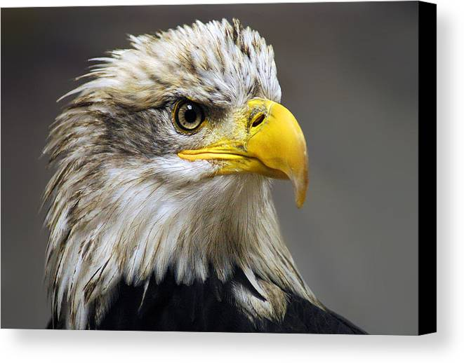 Eagle Canvas Print featuring the photograph Eagle by Harry Spitz
