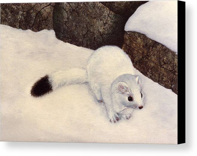 Wildlife Canvas Print featuring the painting Ermine In Winter by Frank Wilson