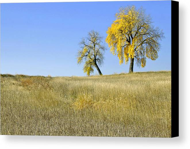 Fall. Blue. Sky. Weeds. Yellow. Grass. Fields. Water. Rain. Clouds.fall Colors Photography. Mixed Media. Mixed Media Photography. Mixed Media Fall Colors. Fine Art Fall Colors. Colorado Fall Colors. Fall Greeting Cards. Yellow Fall Color Photography. Fall Colors In Fort Collins Co. Gallery Fine Art Photography. Fall Landscape Photography. Canvas Print featuring the photograph Fall Days In Fort Collins Co by James Steele