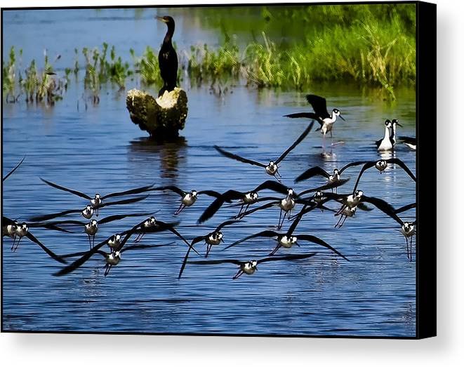 Flying Canvas Print featuring the photograph Flying Birds by Galeria Trompiz