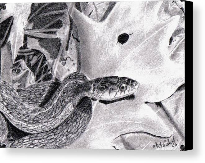 Animals Canvas Print featuring the drawing Garter Snake by Wade Clark