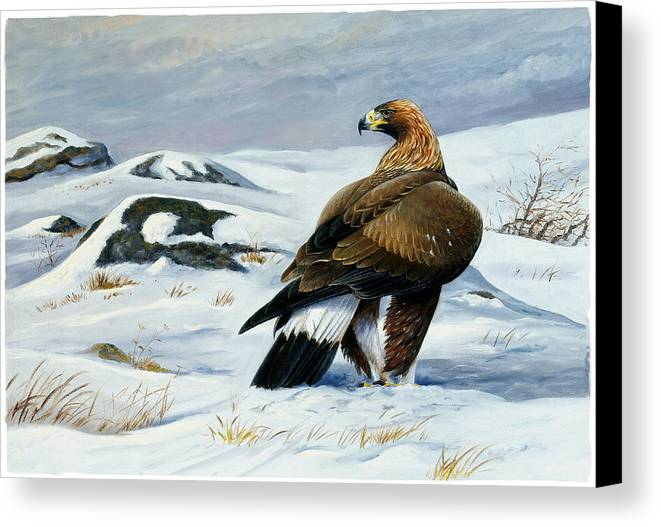 Bird Of Prey Canvas Print featuring the painting Golden Eagle by Dag Peterson
