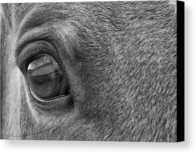 Horse Canvas Print featuring the photograph In Italian Cavallo View by JAMART Photography
