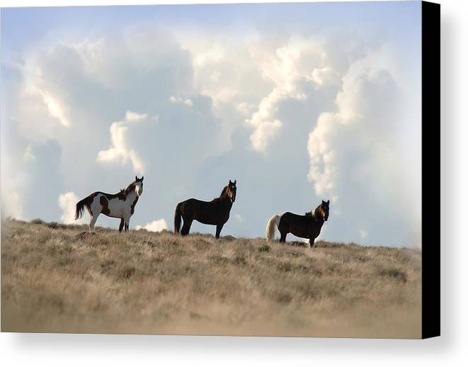 Wild Horses Canvas Print featuring the photograph In The Clouds by Marilyn Gregory