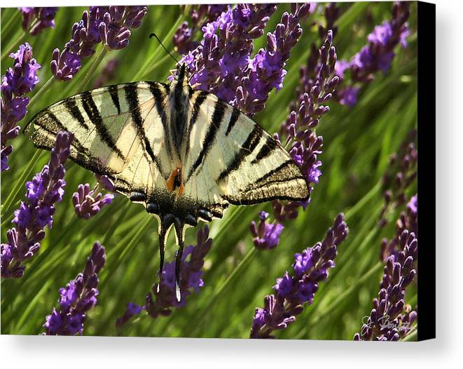 France Canvas Print featuring the photograph In The Lavender by Joe Bonita