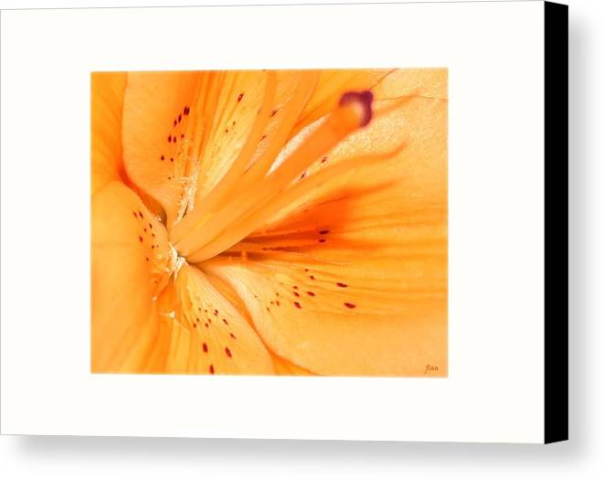 Flower Canvas Print featuring the photograph La Flower by Ruben Flanagan